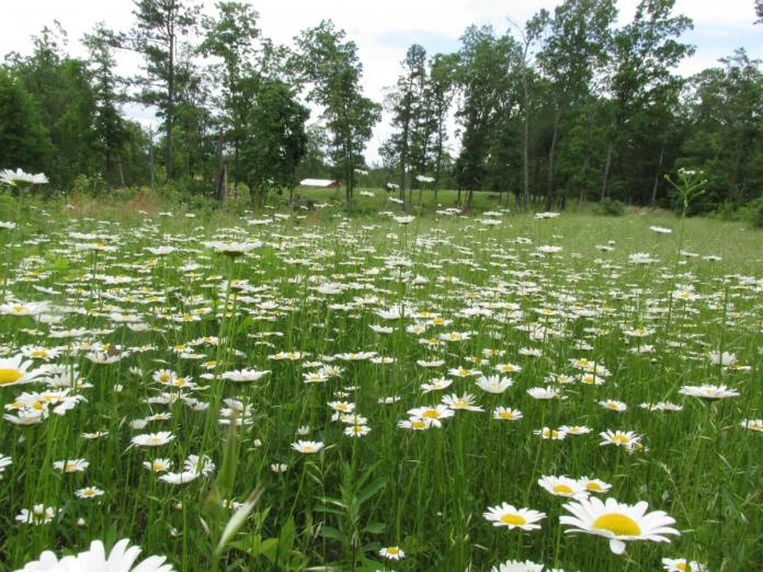 Ground Rules for Foraging Safely • Insteading   Latest News Live   Find the all top headlines, breaking news for free online April 23, 2021