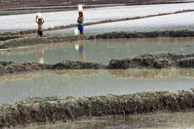 Little girls in Timor-Leste cross a rice field after heavy rains carrying water in plastic containers. Credit: UN Photo/Martine Perret