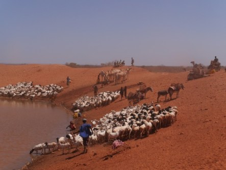 The pastoralists of Ethiopia's Somali region are forced to move constantly in search of pasture and watering holes for their animals. Credit: William Lloyd-George/IPS