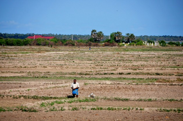 A man stands in the middle of parched paddy land in the northern Kilinochchi District, Sri Lanka. Credit: Amantha Perera/IPS