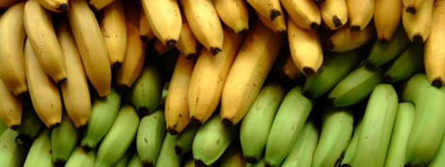 Banana is the eighth most important food crop in the world and the fourth most important in developing countries. Credit: FAO