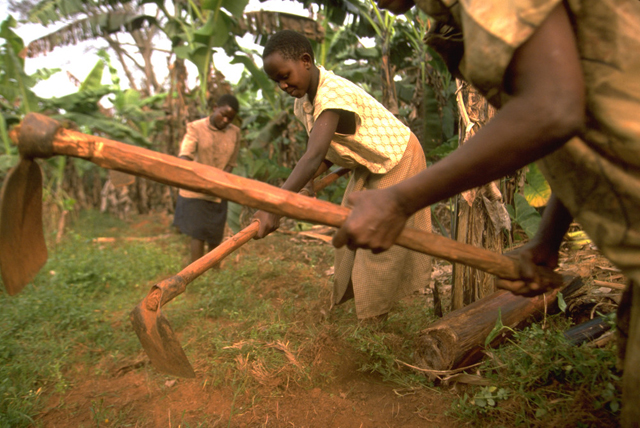 Women farmers in Uganda need both better hand tools and access to animal traction. Photo: IFAD