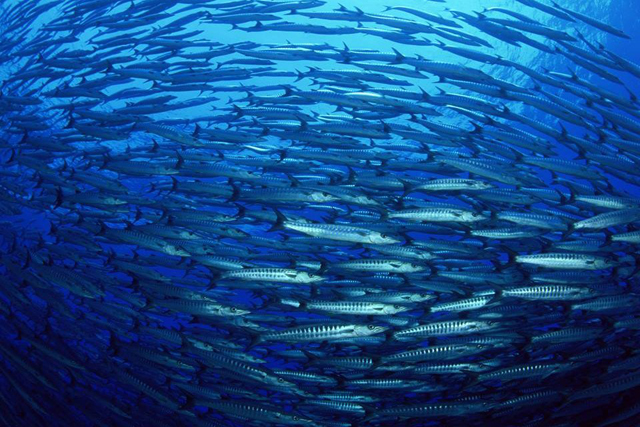 Healthy oceans have a central role to play in solving one of the biggest problems of the 21st century – how to feed 9 billion people by 2050. Credit: FAO
