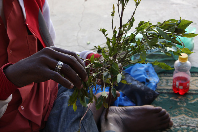 A Somaliland man picking khat leaves during an afternoon session in the capital, Hargeisa. Credit: James Jeffrey/IPS