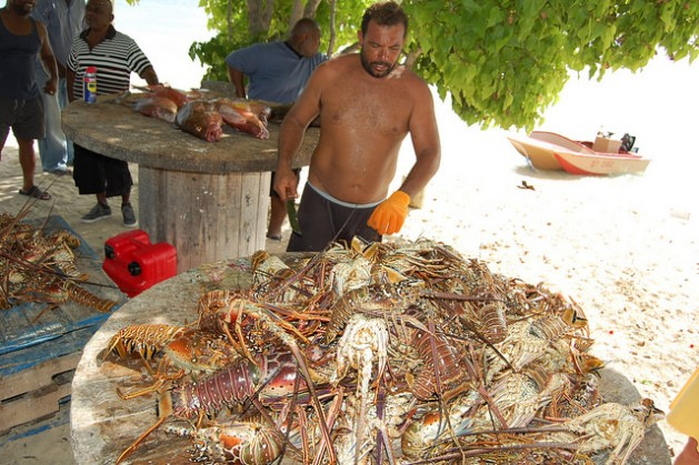 In the Turks and Caicos, the government is searching for new ways to manage the conch and lobster populations. Credit: Zadie Neufville/IPS