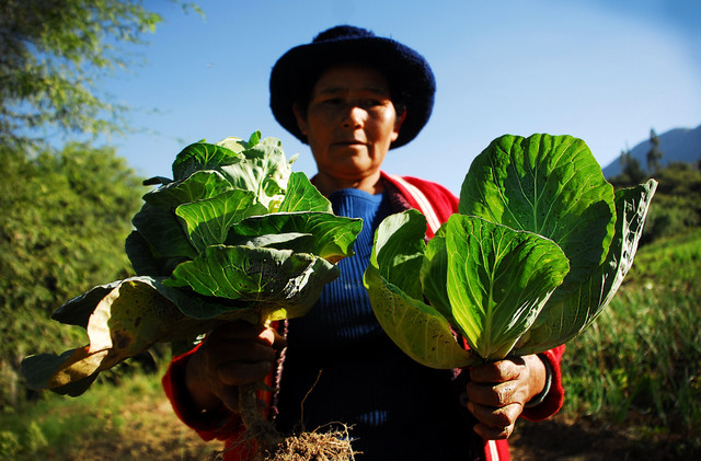 Clemencia Zapata, from Villa Esperanza, proudly holds up the leaves of two cabbages just picked from her small farm 3,000 metres above sea level in the Bolivian Andes, which she plants using organic bio-inputs provided by FAO and the municipality, to replace agrochemicals. Credit: Franz Chávez/IPS