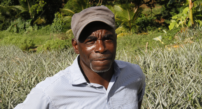 Farmer Stephen Watson Says He Loses About Ec$800 To Thieves Every Month. (Iwn Photo)