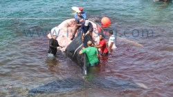 Whale In Bequia Main