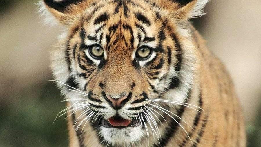 Сбежавших из зоопарка в Германии диких животных поймали ...