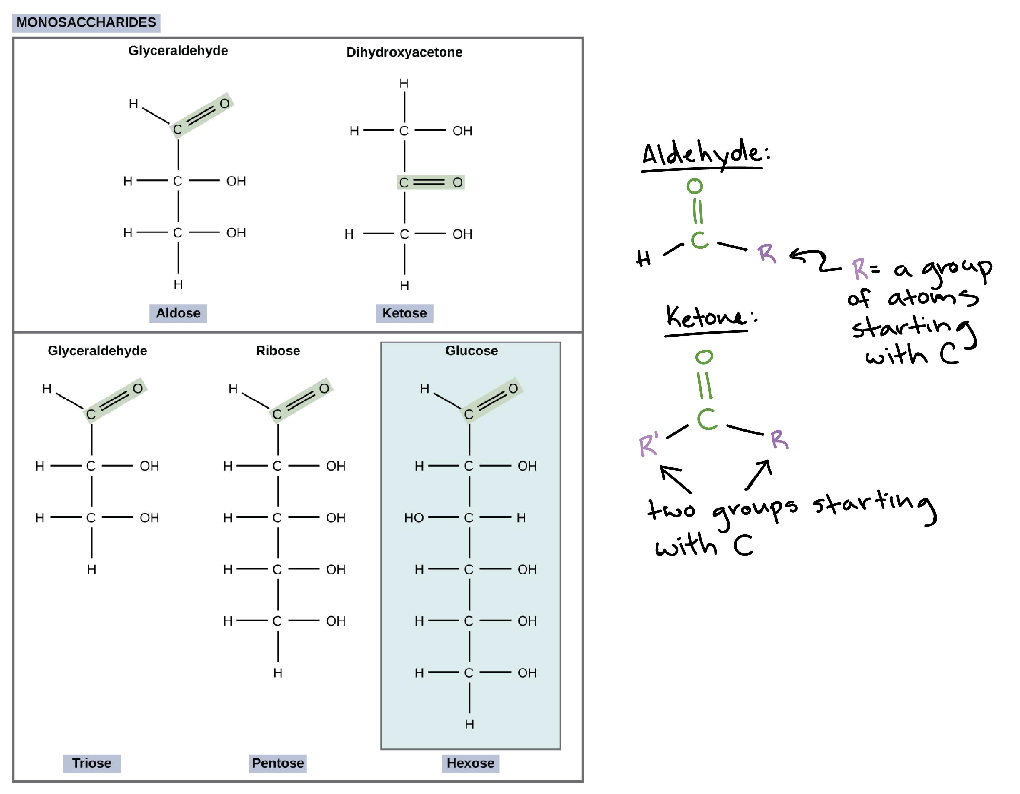 Macromolecule Comparison Table Worksheet