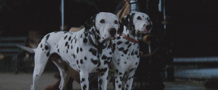 Film Anjing