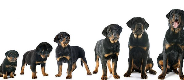 Puppy Growth Chart - The Cutest Puppies