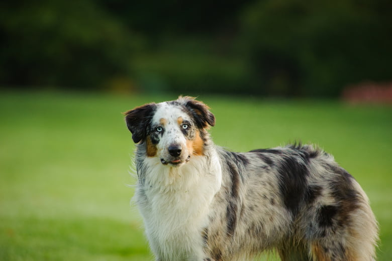 10 Medium Sized Dog Breeds That Are Great For Families Care Com