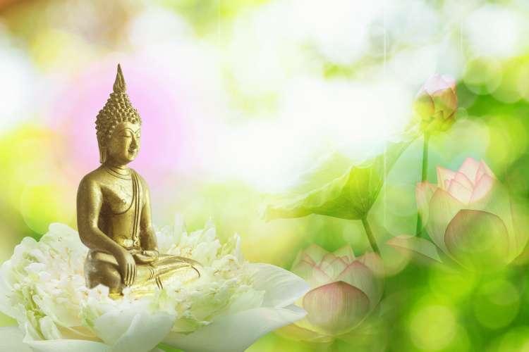 Lotos – cvet zmagoslavja