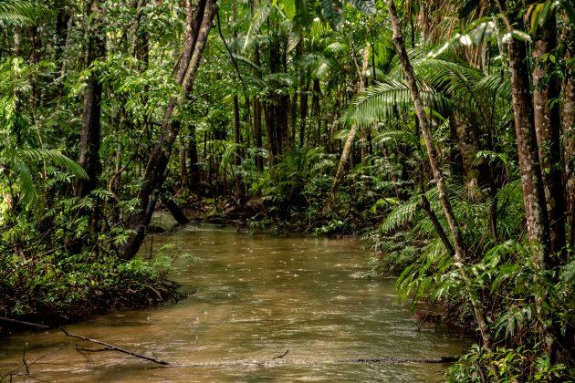 Интересные факты: 20% кислорода образуется в лесах Амазонии