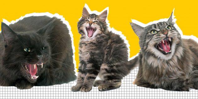 Что делать, если кошка ведёт себя агрессивно