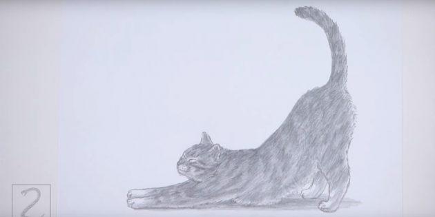 Hogyan kell rajzolni egy állandó macskát reális stílusban