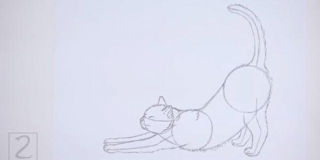 Kép egy szövetséget a hátsó és a macska hasán. Húzza a farkát