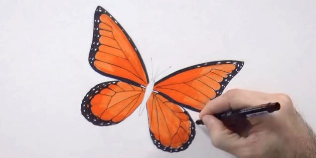 Slide the lower edges of small wings and circle a black pattern