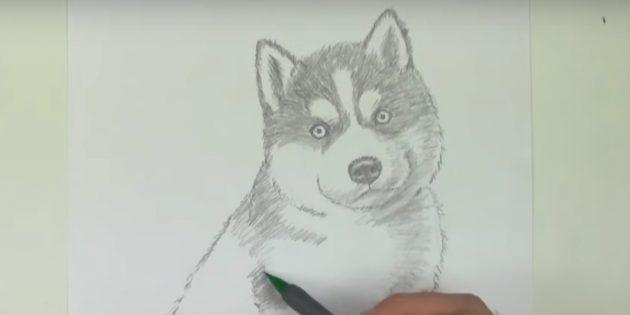 Indicar o padrão acima dos olhos e costurar o topo do cão