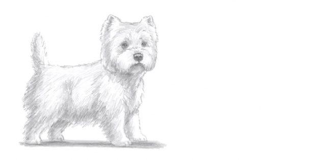 Como desenhar um cão em pé no estilo realista