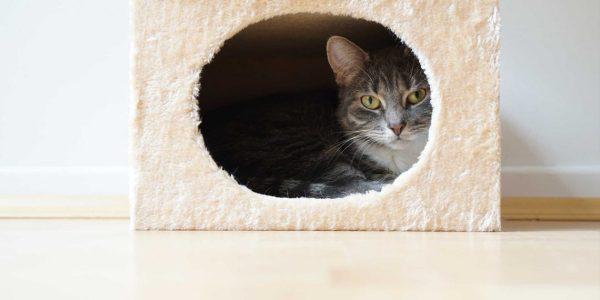 Как сделать кошкин дом фото