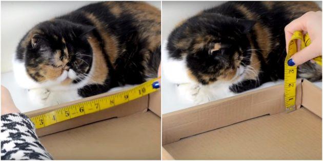 Catchetka voor de kat doe het zelf: maak metingen