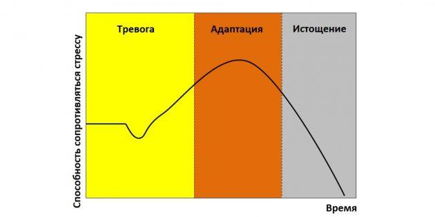 Стадии адаптационного синдрома