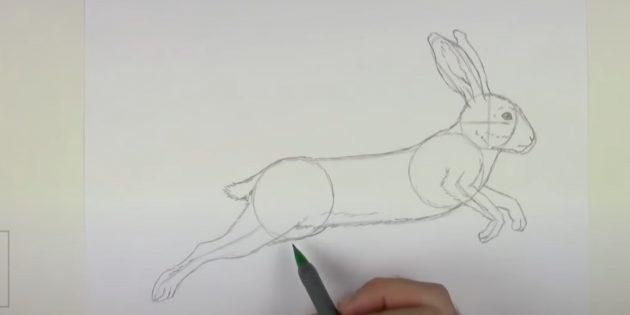 Sådan tegner du en hare: Tegn den anden forreste pote