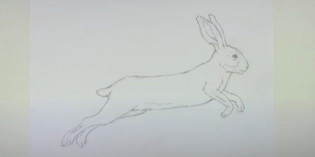 Sådan tegner du en hare: Slet hjælpelinjer