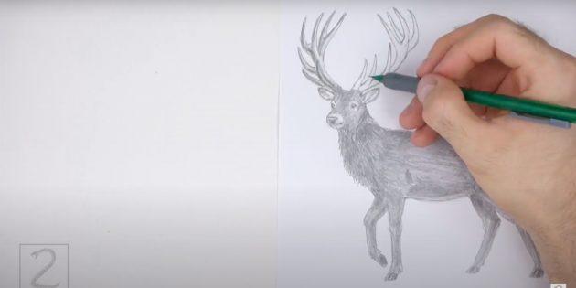 Miten piirtää hirvi: ihon sarvet