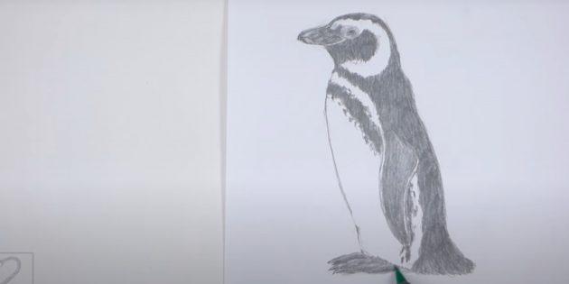 एक पेंगुइन कैसे आकर्षित करें: विंग, पीठ, पूंछ और पंजे त्वचा
