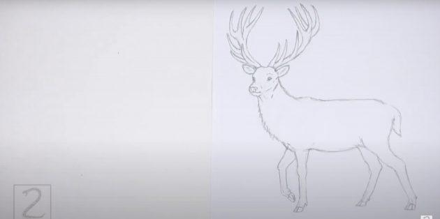 Kuinka piirtää hirvieläin: Piirrä villaa ja häntä