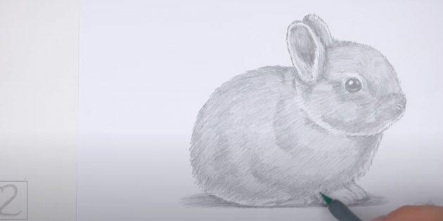 Làm thế nào để vẽ một con thỏ ngồi thực tế