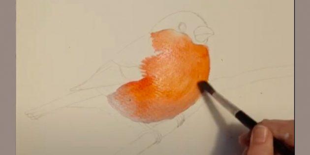 কিভাবে bullfinch আঁকা: পালক যোগ করুন
