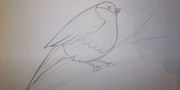 كيفية رسم Bullfinch: ضبط الثدي