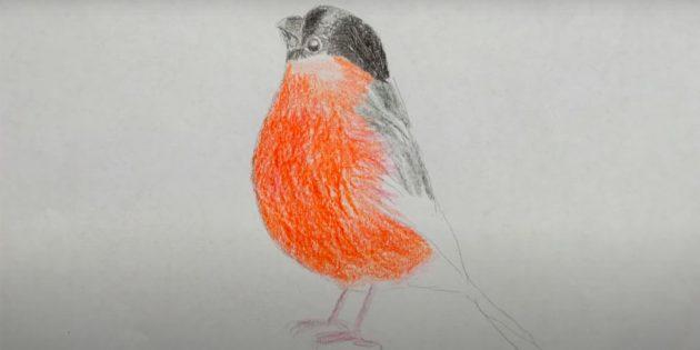 Slik tegner du Bullfinch: Brett hodet ditt