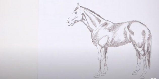 Hoe een paard te tekenen: duik de schaduwen en spieren