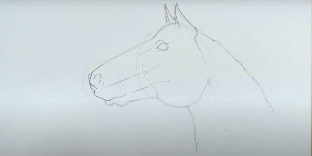 Hoe een paard te tekenen: drijf de nek en trek Nostril