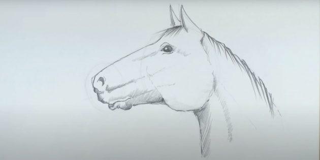 Hvordan tegne en hest: Tegn manen