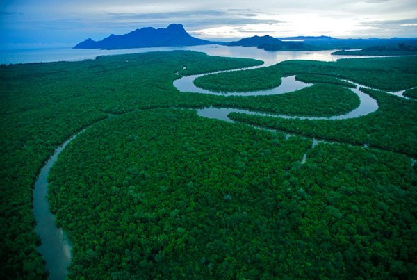 BORNEO RAIN FOREST: PHOTO GALLERIES: Wildlife ...
