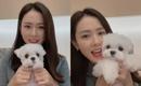ソン・イェジン、愛犬と一緒にファンに近況を公開「ドラマ撮影が始まって…」(動画あり)