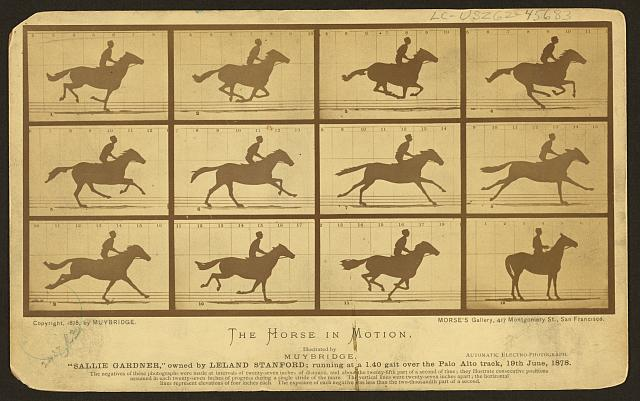 "The horse in motion, illus. by Muybridge. ""Sallie Gardner,"" owned by Leland Stanford, running at a 1:40 gait over the Palo Alto track, 19 June 1878: 2 frames showing diagram of foot movements"