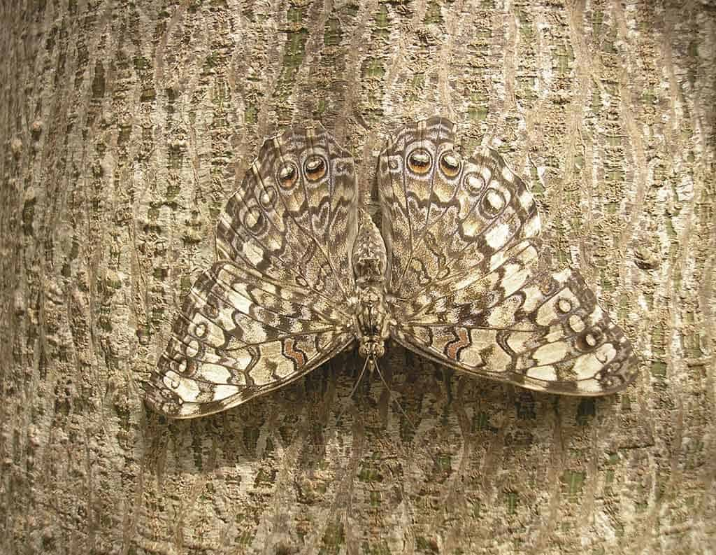 10 Amazing Pictures Of Animals Using Camouflage