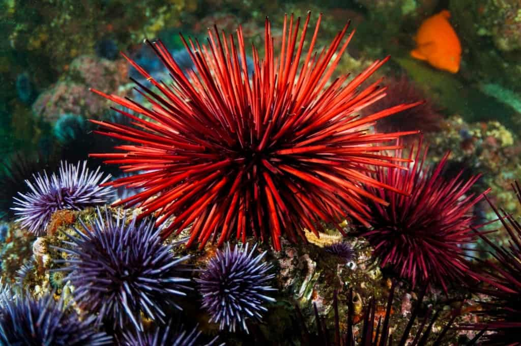 Spines Urchin Sea Foot