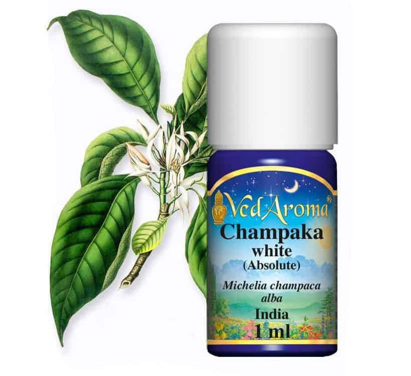 Champaca Absolute Essential Oil, ecoluxury, ecoluxluv, luxury lifestyle, luxury brand, luxury life, luxury zone, alberni street, fblogger, luxury homes, designer, gala, celebrities, personalities, supercar, fashion blogger, lifestyle consultant, sustainable, recycling, plantbased, vegan