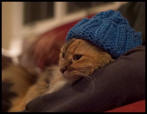 Knithat Cat