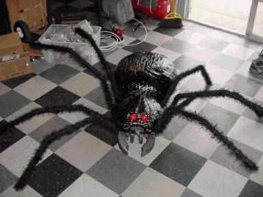 Spiderspinanimation