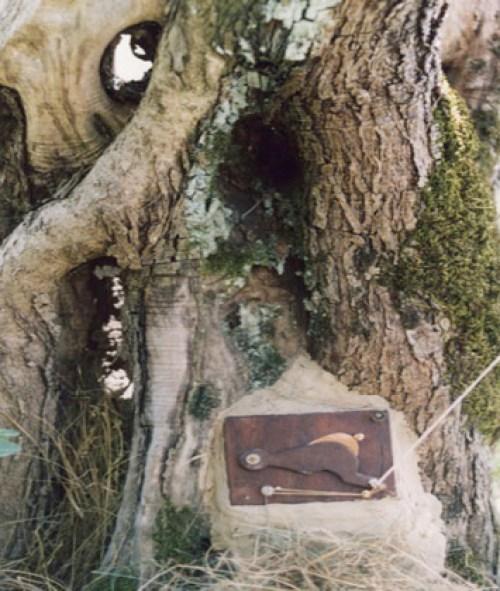 Camera Obscura Tree