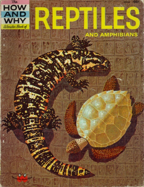 How And Why Reptiles And Amphibians
